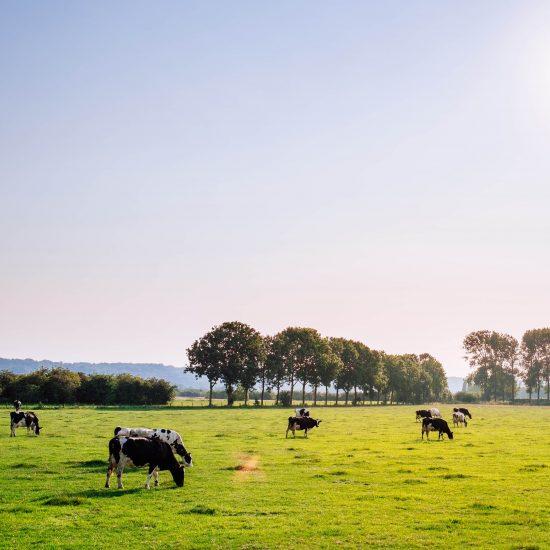 weekendjeweg op de boerderij